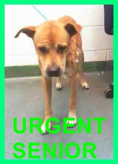 GONE --- BENJI (A1675703) I am a male tan German Shepherd Dog mix.  The shelter staff think I am about 8 years old.  I was found as a stray and I may be available for adoption on 02/01/2015. —Miami Dade County Animal Services. https://www.facebook.com/urgentdogsofmiami/photos/pb.191859757515102.-2207520000.1422666585./918032798231124/?type=3&theater