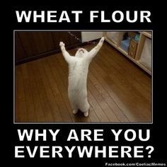 Sometimes you've just got to have a sense of humor! :) (from Gluten Free Meme)