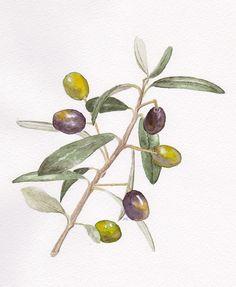 Olive Branch by floria@net, via Flickr