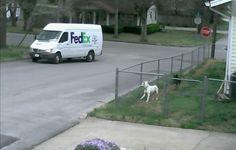 Kurir je zastao na ulici, a psi nisu mogli da se smire! Nećete verovati šta je kamera snimila!