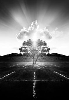 Learn how to create black and white images in Photoshop and how to give them a dramatic look to stand out. Black N White Images, Black And White, Dramatic Look, Photoshop Tutorial, Climbing, Paths, This Is Us, National Parks, Country Roads