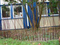 Płotek z wikliny: pędy wikliny wbijamy pionowo w ziemię grupami – po trzy pędy – w odległości 10 cm