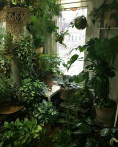 Indoor greenery will spruce up small apartments and large houses alike. For those that lack a green thumb, don't worry visit our webpage today to learn about living walls. Room With Plants, House Plants Decor, Plant Decor, Indoor Garden, Indoor Plants, Home And Garden, Marble Queen Pothos, Plant Aesthetic, Plants Are Friends