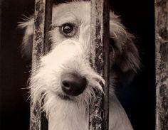 Como denunciar maltrato animal en Argentina :: AnimaNaturalis