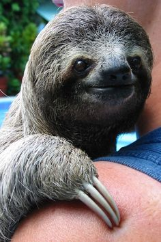 Just love his smile...20 Sloth Smiles, Revealed!