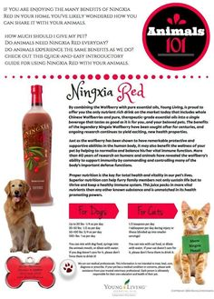 Essential Oils For Cancer, Cooking With Essential Oils, Young Living Essential Oils, Ningxia Red, Animal Experiences, Oils For Dogs, Doterra, Dog Treats, Dog Food Recipes