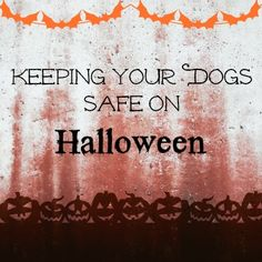 Keeping Your Dogs Safe on Halloween. These simple tips could save your dog's life.