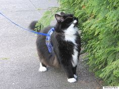 Why You Should Walk Your Cat on A Leash (With Directions!)