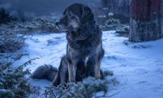 Dog, Snow, Winter hd wallpaper by lise Winter Wallpaper, Wallpaper Pc, Dog Background, Snow Dogs, White Dogs, Animals Images, Winter Snow, Pet Dogs