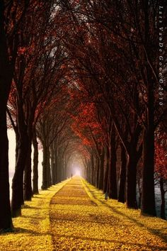 Long gold pathway into fall....