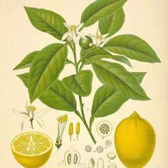 Love Botanicals