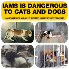 """IAMS & EUKANUBA TEST on ANIMALS (vivisection). Dogs abused, neglected, kept in cramped, filthy cages. They're DEBARKED (researchers find cries for help so annoying they remove their vocal cords). Actual testing is mostly comprised of CUTTING chunks of their muscles out, poorly stitched back together. The parent company is PROCTER & GAMBLE, probably 1 of the most EVIL empires of animal testing. source:vegansofig BOYCOTT PROCTER & BAMBLE!"" DO NOT buy dog foods that abuse dogs. Spread the…"