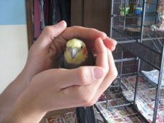 The Secret to taming any bird revealed !