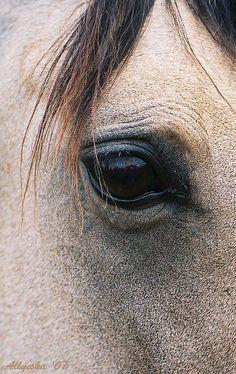 Horse eye by Allyeska, via Flickr