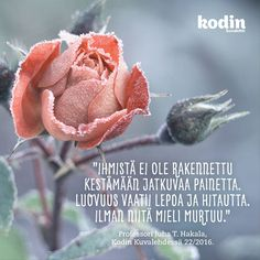 Lepo | Kodin Kuvalehti Pretty Words, Cool Words, Wise Quotes, Motivational Quotes, Finnish Words, Life Lyrics, Quotes About Everything, My Dream Came True, Seriously Funny