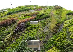 The Oasis of Aboukir green wall by Patrick Blanc.