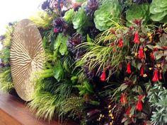 paradis express: Living Green Living Wall
