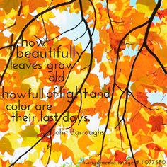 """how beautifully leaves grow old. How full of light and color are their last days.""  #happy #fall #quote #living4media #interior #design"