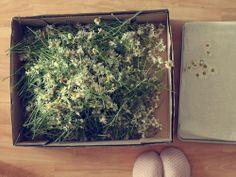 usušený a na čaj najlepší How To Dry Basil, Herbs, Herb, Medicinal Plants