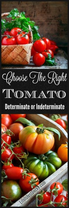 Determinate and Indeterminate Tomatoes. What do those terms mean. Why are they important and which is better for your garden.