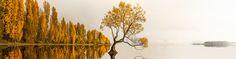 Photo Wanaka Tree with added fog by Ray Jennings on 500px