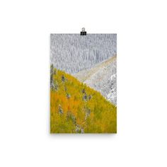 Photo paper poster with beautiful winter evergreens and autumn aspen trees.