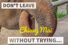 5 unique things to do in Chiang Mai - the gateway to adventure. Elephants, massages, and mopeds. Do not leave Chiang Mai without trying...