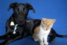 This fall, consider saving a life by adopting a pet at the PetSmart Charities National Adoption Weekend.