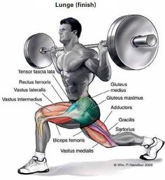 Lunges anatomy