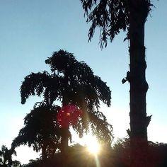 #Gabrielaarroiophotos #nature #trees #sun