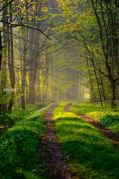 Lane in the forest (Poland) by Michal Sleczek / 500px