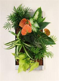 24 Best Succulents Indoor Gardening Images Vertical