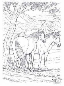Ausmalbilder Pferde Zum Ausdrucken Horse Coloring Pages Horse Coloring Free Coloring Pages