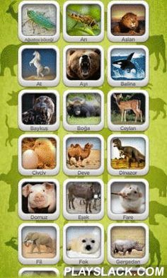 Magic Zoo  Android App - playslack.com , Most known 52 different animals sounds, pictures, videos in this app. This app is suitable for all ages Discover the animals and the most curious, interesting features.
