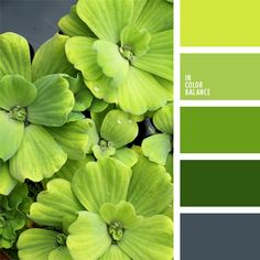 The combination of spring green tones and yellow-green hue is complemented with blue-gray color. This palette can be used to design a spacious kitchen; for photos and posters of natural greenery, possibly in combination with plants. It will enliven strict Yellow Color Combinations, Colour Schemes, Colour Pallette, Color Palate, Color Palette Green, Chartreuse Color, Green Colors, Colours, Gray Color
