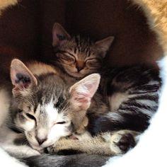 Instagram photo by @Gary Fauvelle via ink361.com  #Cat #Cats #Kitty #Kittens #Feline #Tabby #catsofinstagram #Cute #kitten #Kitties