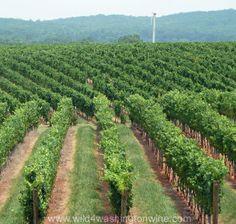 Barboursville Vineyard, Virginia Wine Country.