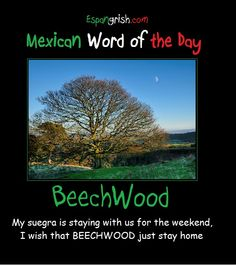 Mexican word of the day ~ Beechwood