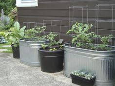 vegetable gardening in containers | More on creating a vegetable garden in containers | OregonLive.com