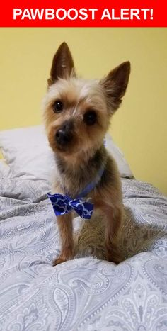 Please spread the word! Louie was last seen in Stamford, CT 06907.    Nearest Address: Near Edgewood Ave & Cleveland St