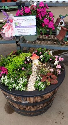 Fairy Garden by Robin at Silverstone Gardens Greenhouse