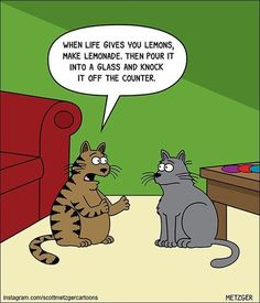 Scott Metzger's Cartoon Comics That Will Have You Laughing For Hours Comics) Scott Metzger cartoon of cats discussing what to do when life gives you lemons.Scott Metzger cartoon of cats discussing what to do when life gives you lemons. Funny Cat Jokes, Funny Cartoons, Cat Memes, Funny Dogs, Cats Humor, Funny Horses, Memes Humor, Hilarious, Funny Animal Pictures