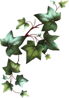 Aquaponics Back To The Roots Vine Drawing, Leaf Drawing, Wall Drawing, Ivy Tattoo, Vine Tattoos, Vine Leaves, Plant Leaves, Watercolor Flowers, Watercolor Paintings