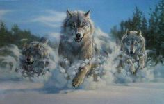 Wolves running in snow.