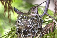 Bird nests are works of art, but why? Learn how birds decorate their nests and why it matters.