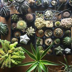 おはようございます。すっかりよく寝た土曜日の朝。さて。#succulent #cactus