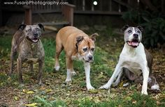 Photographer Captures Moving Images of Senior Dogs to Help Them get Adopted