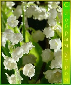 С добрым утром с цветами - Доброе утро - Картинки GIF - Галерейка