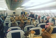 SAUDI PRINCE BUYS 80 FIRST CLASS PLANE TICKETS FOR HIS 80 HAWKS