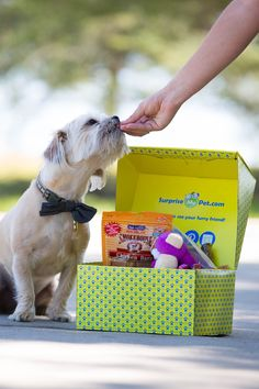 With Surprise My Pet for as little as $29 a month you will receive a box in the mail with carefully selected products and presents for your pooch- anything from toys, bones, and all-natural treats. All treats/chews are inspected to assure they are healthy and safe for your pet!